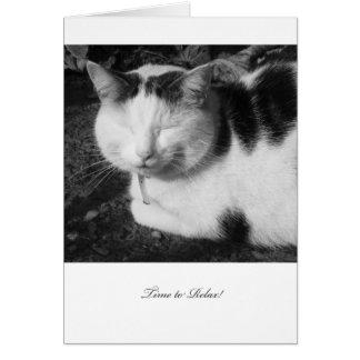 Tajma för att koppla av katten - tomt pensionkort hälsningskort