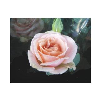 Tända - rosa ros canvastryck