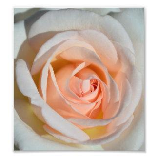 Tända - rosa ros fototryck
