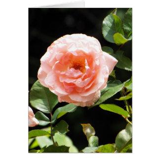 Tända - rosa roskortet hälsningskort