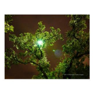 Tända till och med träd på natten vykort