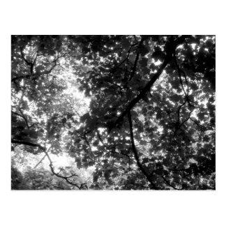 Tända till och med träden vykort