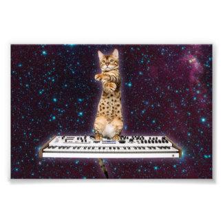 tangentbordkatt - roliga katter - kattälskare fototryck