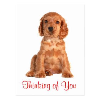 Tänkande av dig vykort för hund för cockerspanielS