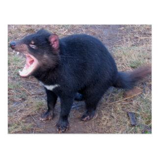 Tasmanian djävulen - vykort