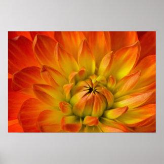 Tätt i fotograferar av den Dalhia blomman med Poster