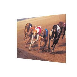Tävlings- vinthundar spårar på canvastryck
