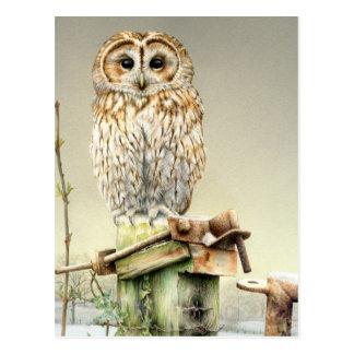 Tawny uggla i vykortet för snökonstvattenfärg vykort
