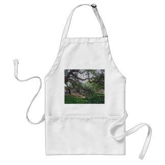 Tendrilträd på Alamoen, San Antonio, Texas Förkläde
