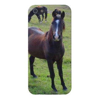Tennessee häst iPhone 5 skal
