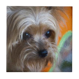 Terrier för dam Yorkshire Kakelplatta