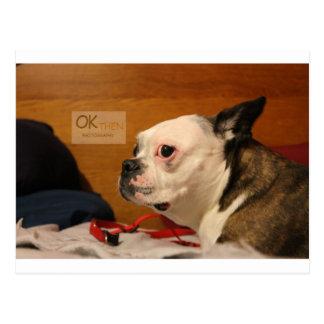 Terrier för OK_THEN Boston Vykort