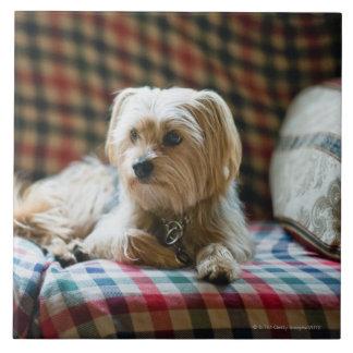 Terrier som ljuger på den rutiga filten kakelplatta