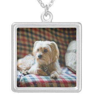 Terrier som ljuger på den rutiga filten silverpläterat halsband