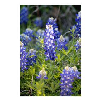 Texas Bluebonnet Foton