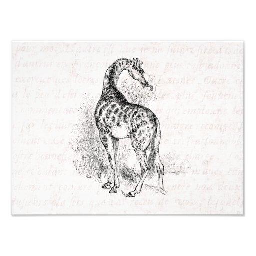 Text för Retro illustration för giraff för vintage Fotokonst