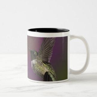 Throated Hummingbird för Male Ruby, Archilochus 2 Två-Tonad Mugg