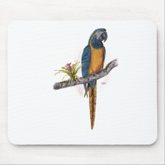 Throated Macaw för blått Musmatta