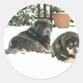 Tibetan Mastiff Caspar & Jampo Runt Klistermärke