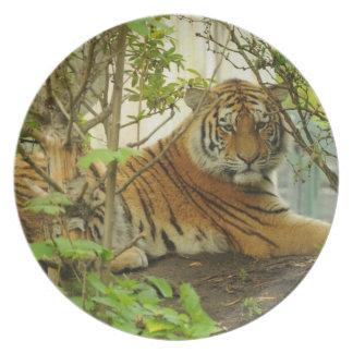 Tiger i skogen tallrik