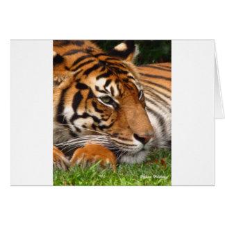 Tiger.jpg Hälsningskort
