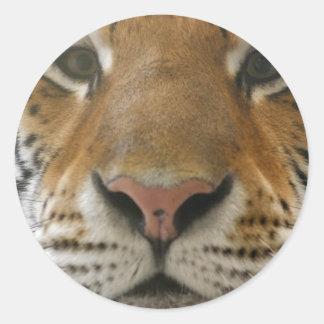 Tiger Runt Klistermärke