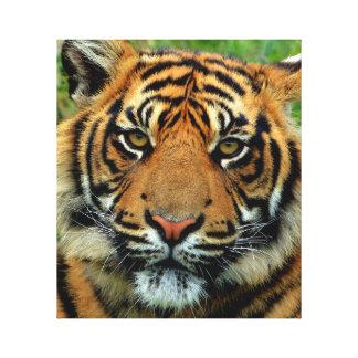 Tiger slågen in kanfaskonst canvastryck