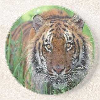 Tiger Underlägg Sandsten