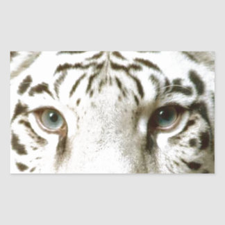 Tigern för klistermärkedjurlivvit synar intensiv rektangulärt klistermärke