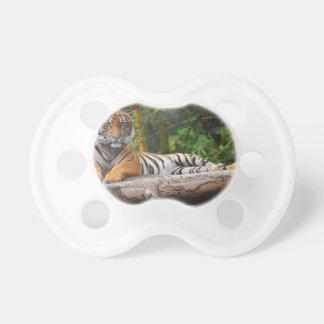 Tigern för malayen som Hög-Res varar slö på, Napp