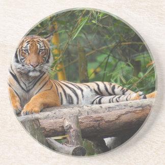 Tigern för malayen som Hög-Res varar slö på, Underlägg