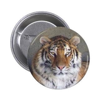 Tigern knäppas standard knapp rund 5.7 cm