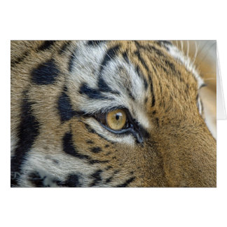 Tigeröganärbild Hälsningskort