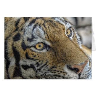 Tigerögon Hälsningskort