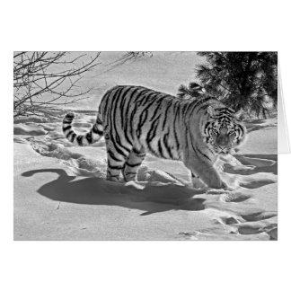 Tigersnö skuggar det svart vitkortet hälsningskort