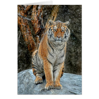Tigersnönedgång Hälsningskort
