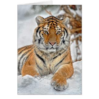 Tigersnöporträtt Hälsningskort