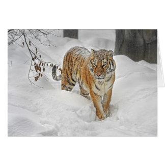 Tigersnöväg Hälsningskort