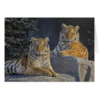 Tigersystrar Hälsningskort