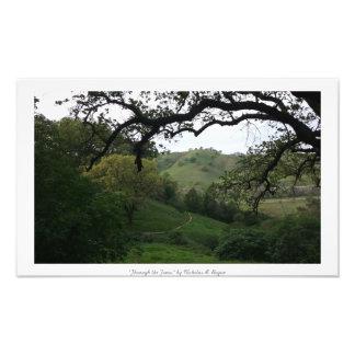 """""""Till och med träden,"""" natur Fototryck"""