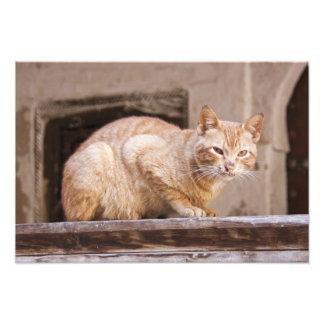 Tillfällig katt i Fes medina, Marocko Fototryck