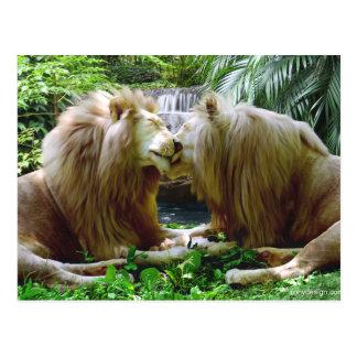 Tillgivet lejon vykort