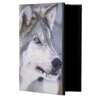 Timra varg-, Canislupus, filmen djura Utah), iPad Air Skydd
