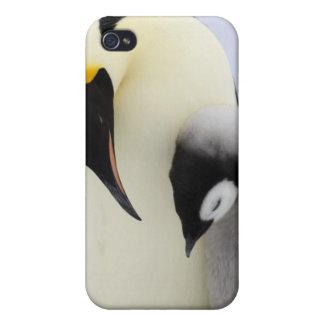 Tittar chick för kejsare pingvin iPhone 4 cover