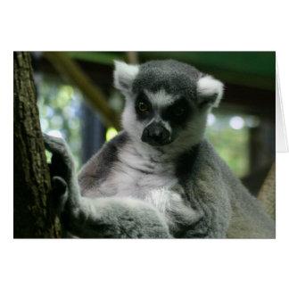 Tittar en Lemur Hälsningskort