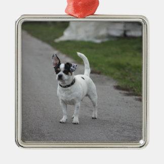 Tittar gulligt för Terrier hund! Julgransprydnad Metall