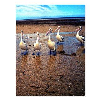 Tjänstgörande pelikan, vykort