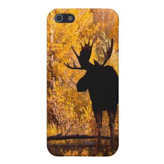 Tjur för älg (AlcesAlces) i guld- pilar 2 iPhone 5 Fodraler