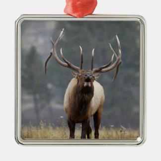 Tjurälg som bugling, Yellowstone NP, Wyoming 2 Julgransprydnad Metall