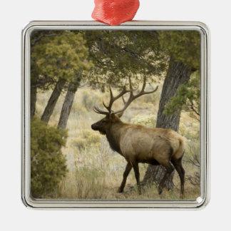 Tjurälg, Yellowstone nationalpark, Wyoming, Julgransprydnad Metall